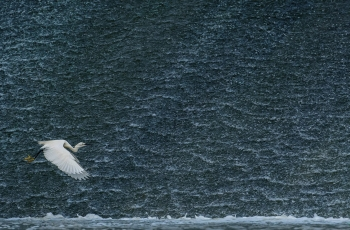 中国摄影报 段文科:保护鸟类是摄影人的天职