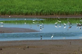 拜读总版主《保护鸟类是鸟类摄影人的天职》一文