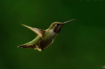 鸟类之最趣闻