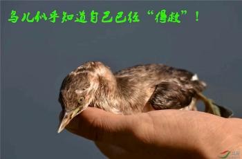 打击非法行为,还水鸟一个安全栖息地