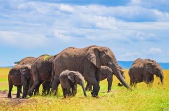 非洲象大批集体死亡的灾难警示