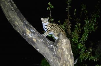 《野生动物 是要依靠人类来保护的》