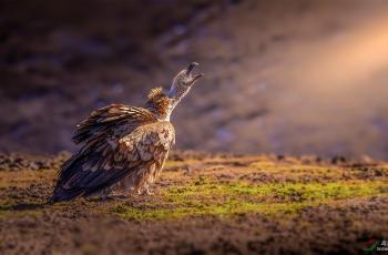 鸟类组冠军!亚洲最佳自然摄影大赛今晚揭晓!