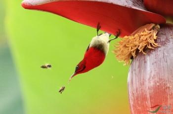 野蜂飞舞【贺获每日佳作】
