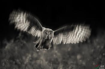 乌林鸮------祝贺荣获首页黑白影像精华!!!