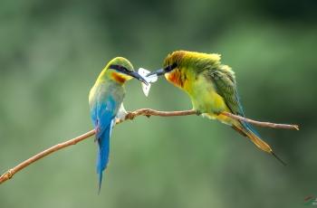 亲爱的,今天换个口味蜻蜓吃腻了!(祝贺荣获首页每日佳作)