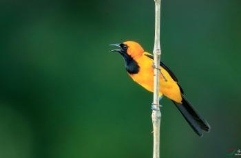 走进世界鸟种大国 ——哥伦比亚《祝贺老师佳作荣获图文精华》