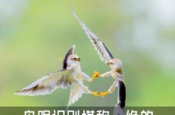 画质细腻专业操控 鸟眼识别堪称一绝的佳能专微EOS R5