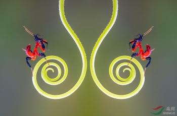 螳螂创意之美