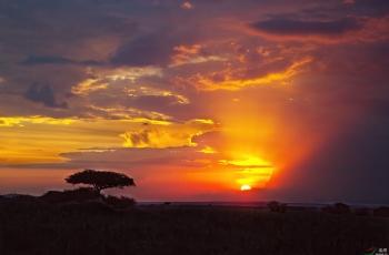 《野性肯尼亞》