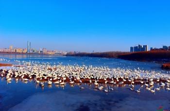 2020:中国鸟网彰显担当作为的一年!
