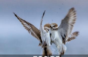佳能专微EOS R5——野生动物摄影的变革者
