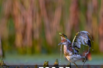 专微时代 EOS R5鸟类与动物拍摄攻略解析