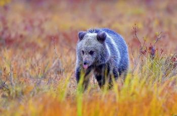 棕熊宝宝(祝贺荣获首页动物精华)
