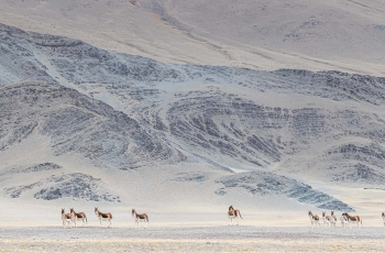 藏野驴的家园(荣获首页动物精华)