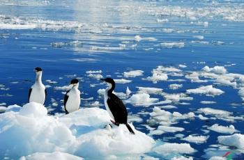 南 极,湛 蓝 的 震 撼