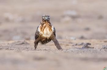 甘南之行——遗憾而又充满惊喜的拍鸟之旅