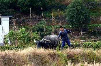 """""""三牛""""精神 是当今时代赋予我们摄鸟人的使命与职责"""