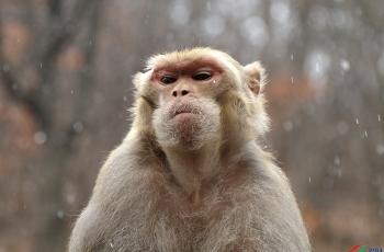高高在上得猴王-------贺荣获首页精华
