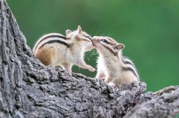 哥俩好 --- 祝贺荣获野生动物首页精华!