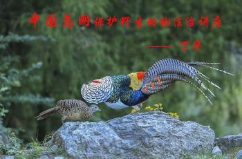 世界野生动植物日  中国鸟网开学第一课