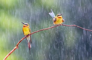 无畏风雨---祝贺荣获每日一图