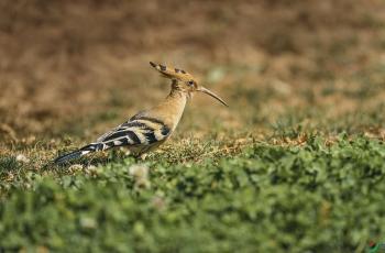家乡有宝:索尼Alph9全画幅微单和SEL200600G镜头搭配拍鸟心得体会