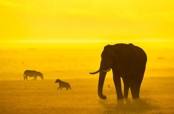 非洲的金黄色-------贺荣获首页精华