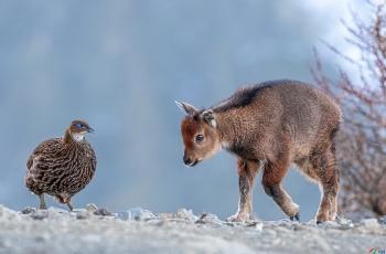 平等对话(祝贺荣获首页动物精华)