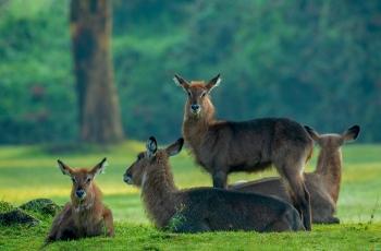 水羚羊 ----  祝贺荣获野生动物首页精华!