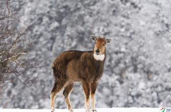 警惕 ----  祝贺荣获野生动物首页精华!