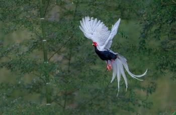 鸟类摄影  我们需要什么样的审美(一家之言)
