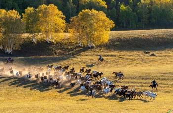 秋日坝上牧马