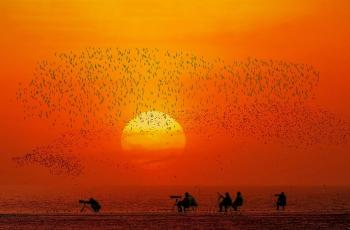 海滩鸟浪---恭贺老师荣获每日一图!!