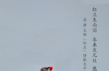 太平花鸟图