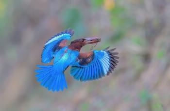 漂亮的飞翔!(恭贺荣获首页鸟类精华)