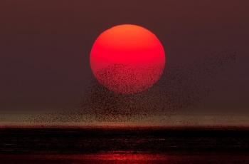日落鳥浪(合成)(祝賀老師榮獲首頁精華)