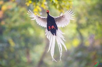 《飞得更高》—— 周末快乐!~~~贺图获《首页鸟类精华》