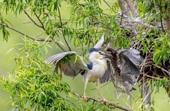 鳥類同人類一些做法為何如此相似