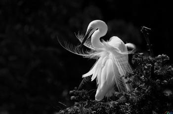 羽袖輕紗------祝賀榮獲首頁黑白影像精華�。�!
