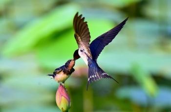 候鳥遷徙導航