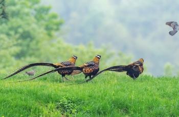 生态文明,和谐共生,共享大自然之美!(祝贺佳作荣获首页鸟类精华)