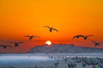 日出鹅湖 (贺获鸟类精华)