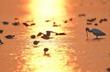 深圳灣的清晨