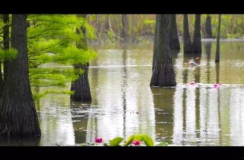 池杉湖---南京
