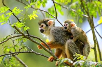 松鼠猴------贺获首页动物精华!!!