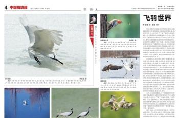 《中国摄影报》发表鸟网会员作品