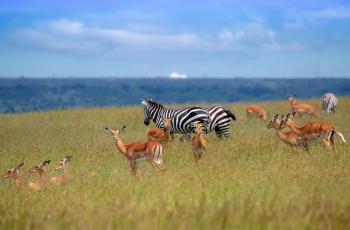 非洲草原是这样的-------贺荣获首页精华!