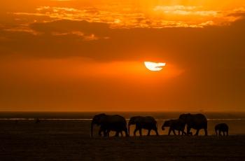 夕阳下的象群(祝贺荣获首页动物精华)
