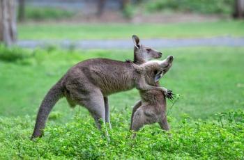 拥抱----祝贺荣获野生动物首页精华!